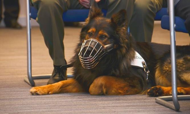 Jano - pies służbowy Bieszczadzkiego OSG  fot. BiOSG