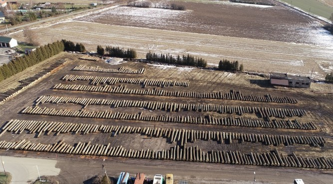 Na składnicy w Oleszycach wystawione było cenne drewno fot. GEOS Szymon Ozimek
