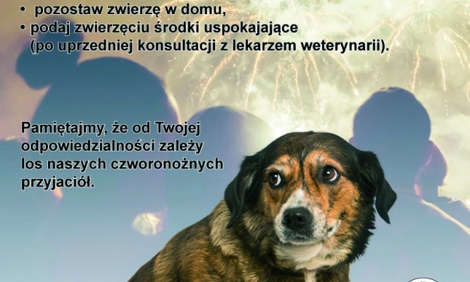 fot:toz.pl