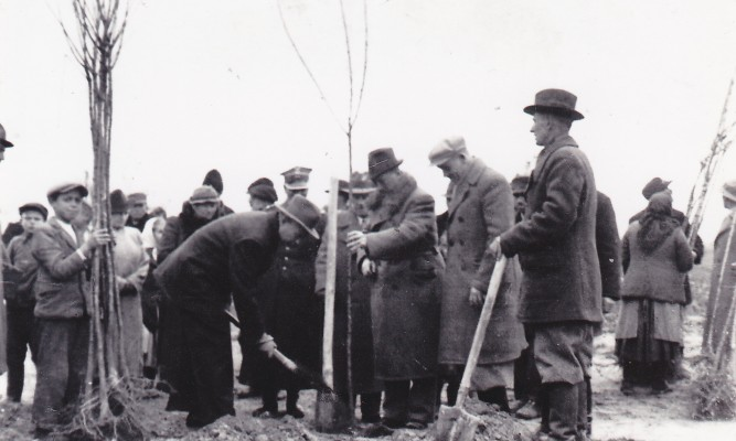 Rok 1938 z okazji 20 – lecia odzyskania niepodległośc odbyła się akcja sadzenia drzew owocowych - czereśni